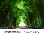 Tunnel Bamboo Trees And Walkwa...