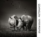 Two White Rhinoceros In The...