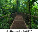 jungle bridge - stock photo