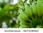 Unripe Bananas Close Up