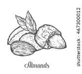 almond nut seed vector.... | Shutterstock .eps vector #467300012