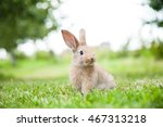 Bunny Rabbit On The Grass....