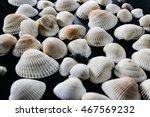 shells | Shutterstock . vector #467569232