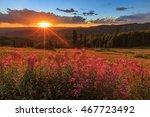 Sun Beams And Wildflowers In...