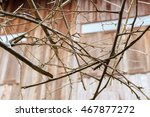 branches of dry dead tree  ... | Shutterstock . vector #467877272
