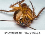 macro of cockroach insects of... | Shutterstock . vector #467940116