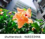 beautiful peach color flower...   Shutterstock . vector #468333446