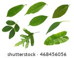 leaves set isolated on a white... | Shutterstock . vector #468456056