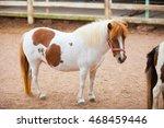 Dwarf Horses Are Beautiful...