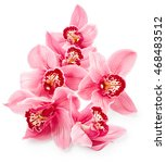 Pink Orchid Flowers Isolated O...