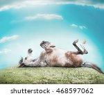 Horse Lying On His Back   Feet...