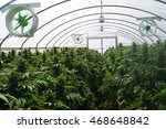 large legal marijuana farm... | Shutterstock . vector #468648842
