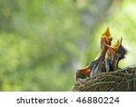 Three Very Hungry Baby Robins...