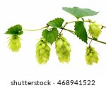 hop cones and leaves isolated... | Shutterstock . vector #468941522