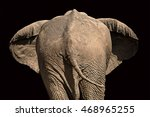 View Of The Rear Of An Elephant ...