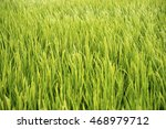 Small photo of Abundance of green rice field, focus on center of frame.