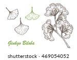medicinal plant set. hand drawn ... | Shutterstock .eps vector #469054052