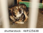 scared dog in shelter cage with ... | Shutterstock . vector #469125638