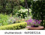 backyard with bushes and... | Shutterstock . vector #469385216