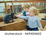 Stock photo children play with the rabbits in the petting zoo 469404602