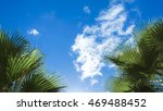 Blue Sky And Tree Background...