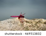 Bright Red Dragonfly Perched O...