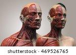 Human Anatomy Background   Mal...
