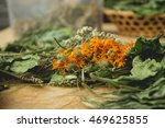 collection of medicinal herbs   ...   Shutterstock . vector #469625855