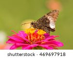 Hoary Edge Butterfly On A...