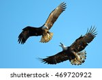 bald eagle battle | Shutterstock . vector #469720922