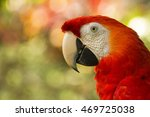 Close Up Of Costa Rican Scarle...
