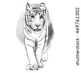white tiger walking slowly and... | Shutterstock .eps vector #469761302