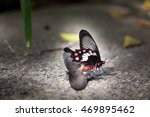 butterfly mating display in... | Shutterstock . vector #469895462
