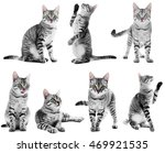 Stock photo beautiful cat collection isolated on white 469921535