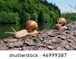 Snails Going For A Trip