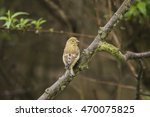 greenfinch juvenile  perched on ... | Shutterstock . vector #470075825