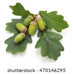 Green Acorns Isolated On A...