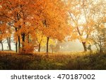 autumn in sunny forest  natural ... | Shutterstock . vector #470187002