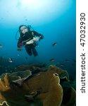woman scuba diver swimming in... | Shutterstock . vector #47032930