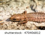 macro shot of a lizard. early... | Shutterstock . vector #470406812