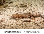 macro shot of a lizard. early... | Shutterstock . vector #470406878