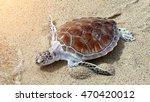 hawks bill sea turtle release... | Shutterstock . vector #470420012