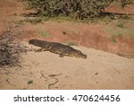 Small photo of The african crocodile