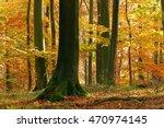 beech tree in autumn  leaves... | Shutterstock . vector #470974145