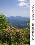 Small photo of Mountain Laurel in North Carolina