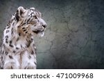 drawing snow leopard portrait... | Shutterstock . vector #471009968