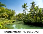 Coconut Palms Above The River...