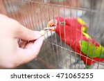Red And Green Parrot In A Cage