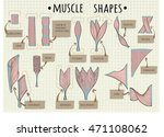 types of human muscle vector... | Shutterstock .eps vector #471108062