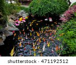 Colorful Japanese Koi Fish In ...